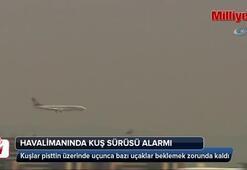 Atatürk Havalimanında 'kuş sürüsü' alarmı