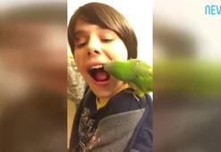 Dünyanın tek dişçi papağanı