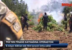 PKKnın finans kaynağı kenevir tarlalarına operasyon