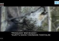 Kurultay sırasında Bengütürk TV kurt belgeseli yayınladı