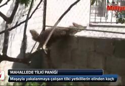 Adanada mahallede tilki paniği