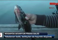 Mogan'da Akvaryum Pirana balığı yakalandı