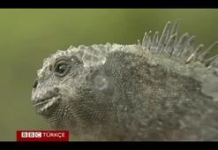 Galapagos Adaları yanardağın tehdidi altında