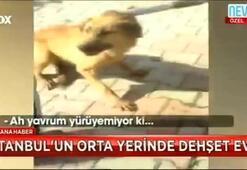 İstanbulun orta yerinde dehşet evi