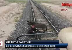 İple demiryoluna bağlanan eşek ölüme terk edildi