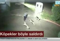 Köpekler böyle saldırdı