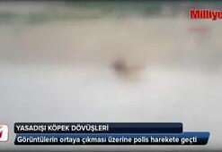 Yasadışı köpek dövüşleri polisi harekete geçirdi