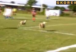 Futbol maçına kuzu molası