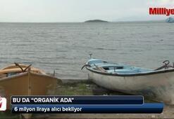 Uluabat Gölünün ortasında satılık organik ada