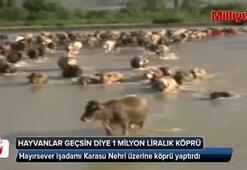 Hayvanlara 1 milyon Liralık köprü
