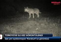 Karakurt Türkiyede ilk defa görüntülendi
