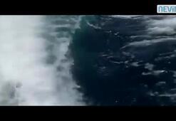 Katil balinalar tekneye saldırdı