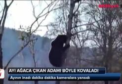 Ayı ağaca çıkan adamı böyle kovaladı