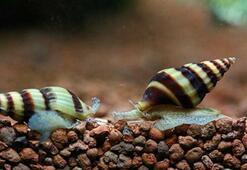 Pasifik Okyanusunda üç yeni balık türü keşfedildi