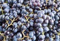 Kokulu üzüm nedir ve faydaları nelerdir