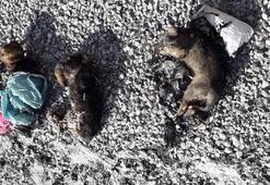Yer: Van Köpekler bu halde bulundu