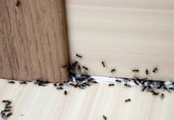 Karınca kovucu yöntemler