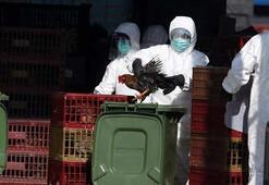 Çinin kuş gribi virüsünün örneklerini paylaşmaması ölümlere neden olabilir