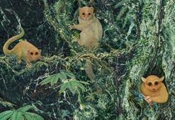 Daha önceden bilinmeyen üç eski primat türü tespit edildi