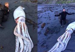 Dalgıçlar Yeni Zelandada kıyıya vurmuş dev mürekkep balığı buldu