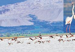 Flamingolar geri döndü