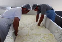 Kırklareli peyniri 16 ülkenin sofrasında