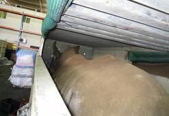Her biri 1 ton THY böyle taşıdı…