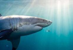 Köpek balıklarının yeni bir düşmanı var: Mıknatıslar