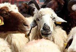 TZOBdan kurbanlık hayvan sayılarına ilişkin açıklama
