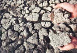 Mardin'de 1.3 milyon dekarda ekili hububat ve mercimek kurudu