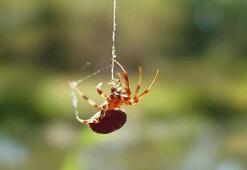 Türkiyede yeni örümcek türü keşfedildi
