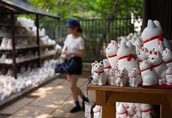 Tokyodaki Şanslı Kedi tapınağı Instagram kullanıcılarının akınına uğradı