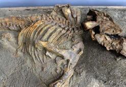 Çinde 174 milyon yıllık dinozor fosili bulundu