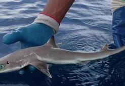 Yeni bir köpek balığı ve yılan türü keşfedildi