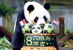 Panda Yuan sekiz oldu