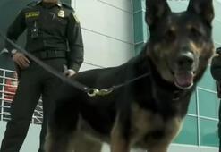 Bu köpeğin başına 70 bin dolar ödül kondu