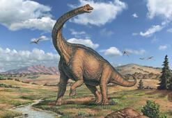 Dinozorlar akşam yemeğinde ne yiyordu