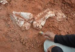 200 milyon yıllık dev dinozor fosili bulundu