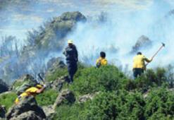 Sekiz ayda 1.5 milyon ağaç yandı