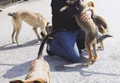 Türkiye'deki sokak hayvanlarına bütün dünya sahip çıkacak