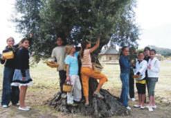 Dünya çocukları zeytin toplayıp kültürü paylaştı