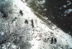 Minibüs uçuruma düştü: 4 ölü 10 yaralı