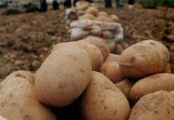 Son dakika: Patates ve soğan fiyatlarıyla ilgili çok önemli açıklama
