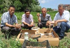 Orkide tarlada kilosu 50 TLden satıldı