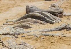 3,5 metre uzunluğunda, yarım tondan daha ağır... Yeni keşfedildi