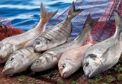 Balık, tavuk, yumurta, süt ve bal ihracatında 1 milyar dolar barajı aşıldı