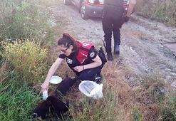 Polis yavru köpekleri sütle besledi
