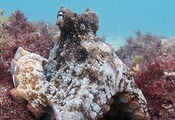 Biyologlar su altında sadece ahtapotlara özel şehir keşfetti