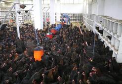 Rizeli genç girişimci bankacılığı bıraktı tavuk çiftliği kurdu