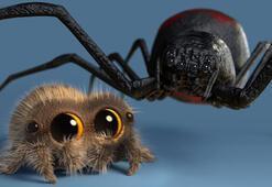 Örümcek Lucas, gerçek bir YouTuber olarak anılmaya başlandı